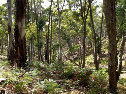 Mount Rae Forest at Taralga NSW - home to many threatened species.
